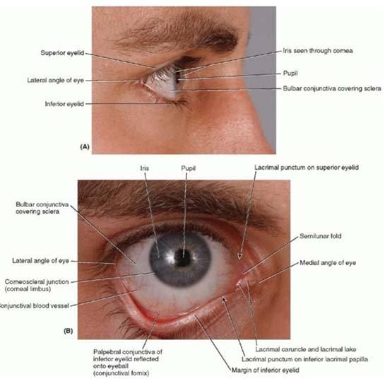 Gambar 6. Penampang permukaan mata.1