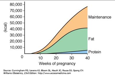 Grafik Kebutuhan Kalori pada Kehamilan