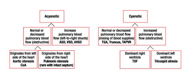 Pembagian Penyakit Jantung Kongenital