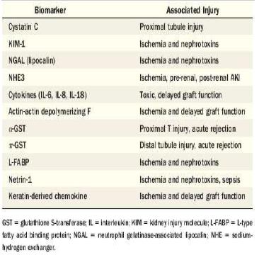 Biomarker terkait gagal ginjal akut